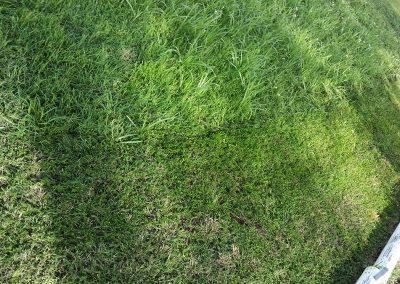 DALBY-LAWN-MOWING-DURING